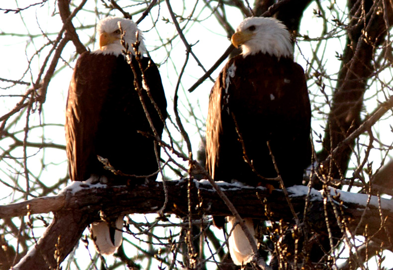 File photo Eagle Days along the Fox River.