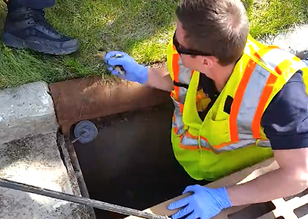 A Kaukauna firefighter rescues ducklings from a storm sewer on May 8, 2017. KFD photo,