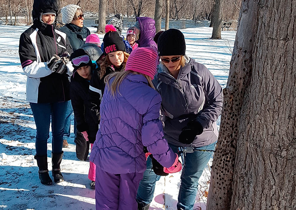 Students help tap a maple tree during a school district visit to 1000 Islands Environmental Center. As the have each spring for decades, they were participating in the Sugar Bush program where they learned about maple syrup making. Kaukauna Area School District photo.