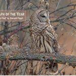 Kaukauna photographer wins in wildlife photography contest